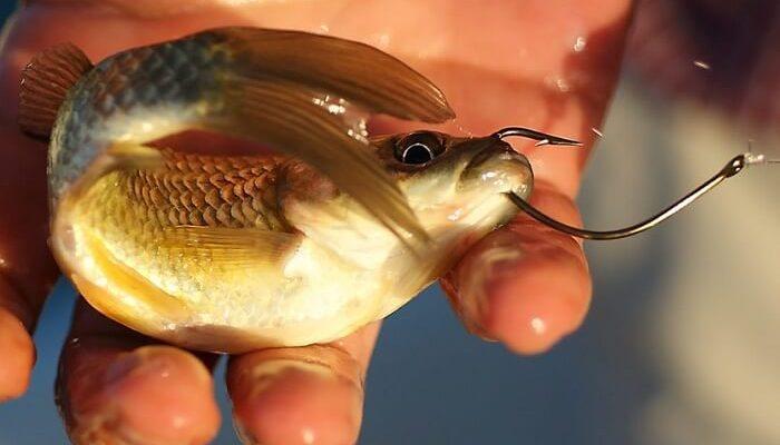 рыбалка на живца