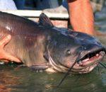 Летняя рыбалка на сома на реке