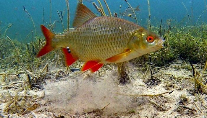 Рыбалка в Украине: что, где, когда ловить