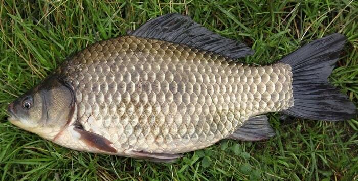 как будет клевать рыба завтра