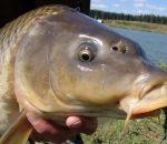 Рыбалка на карпа в Украине: способы ловли