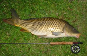 Рыбалка на сазана: выбор снастей и наживки