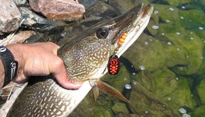 Сезонная рыбалка на щуку