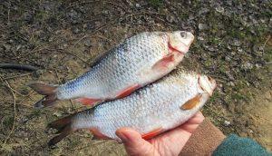 Календарь рыбака на конец августа