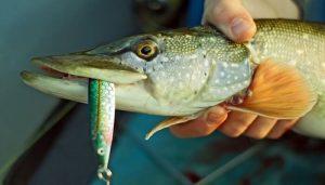 Правила ловли рыбы в Украине 2016