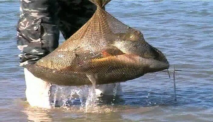 как и чем ловить рыбу в геническе