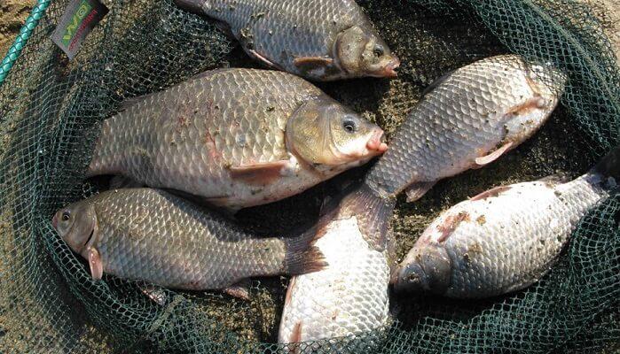 Рыбалка в августе в Украине: что и как ловить