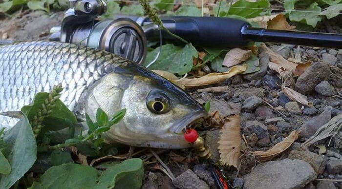 Способы ловли рыб в Украине в зависимости от используемых снастей
