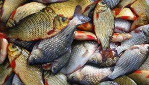 Виды рыб и способы их ловли