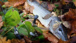 Ловля щуки осенью: особенности рыбалки по месяцам