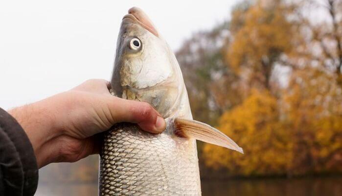Календарь рыбака на 12-18 сентября