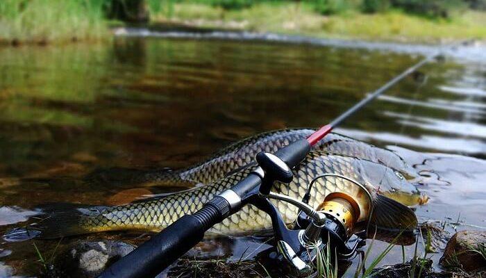 Ловля карпа на фидер: особенности рыбалки (+видео)