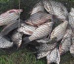 Сезонная рыбалка на карася