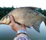 Рыбалка на леща: особенности ловли в разное время года