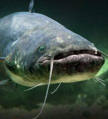 Рыбалка на сома в разное время года