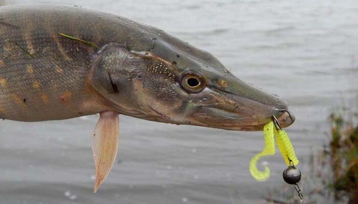 Календарь рыбака на 17-23 октября