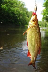 Ловля мирных рыб под конец октября
