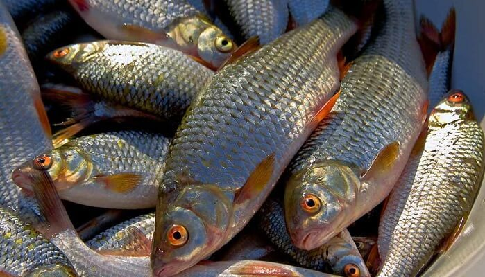 Календарь рыбака на 24-31 октября
