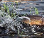 Штрафы за нарушение правил рыболовства в Украине могут повыситься в 15-20 раз