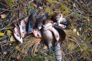 Ловля карася в октябре: особенности и грамотная оснастка