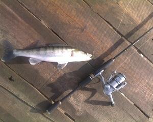 Спиннинг на судака для рыбалки с берега