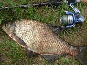 как готовить прикормку для ловли рыбы