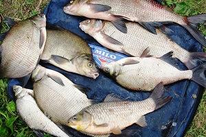 Календарь рыбака на 14-21 ноября ловля леща