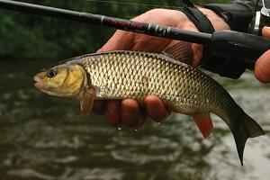 Календарь рыбака на 21-30 ноября ловля голавля