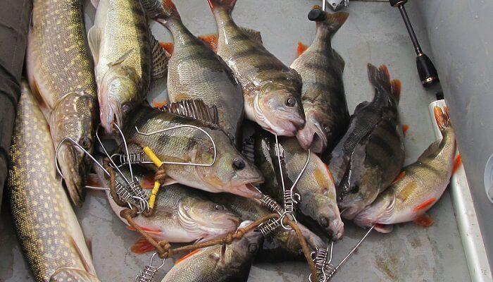 Календарь рыбака на 21-30 ноября