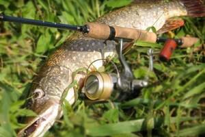 Спиннинговая ловля в Украине летом