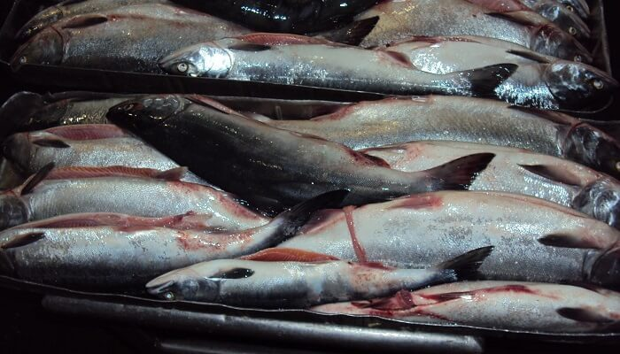 Немецкие торговые сети интересует экспорт рыбной продукции из Украины