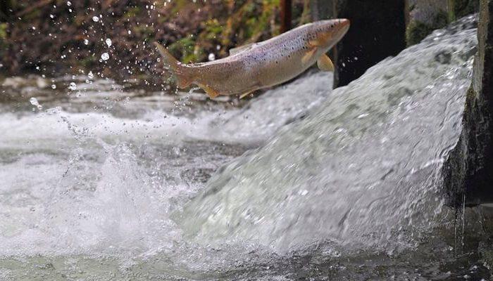 Оценка чешскими учеными рыбных запасов Украины: чего ожидать