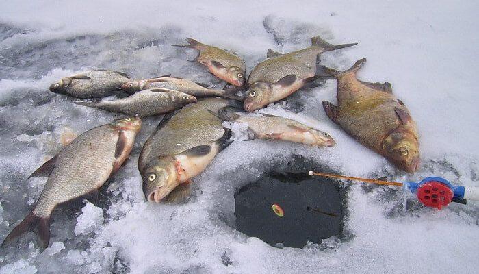 Календарь рыбака на 19-26 декабря: ловля щуки, густеры и леща
