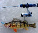Снасти для зимней рыбалки: особенности отдельных компонентов