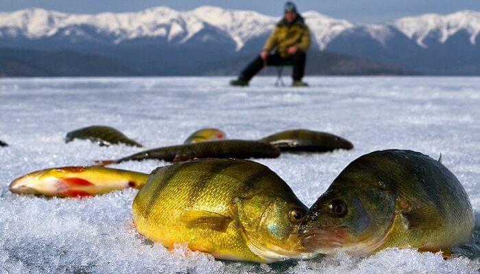 Зимняя рыбалка в Украине: особенности подледной ловли и оснастки