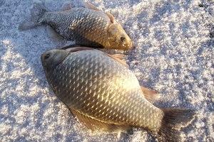 Зимняя рыбалка на карася: особенности ловли