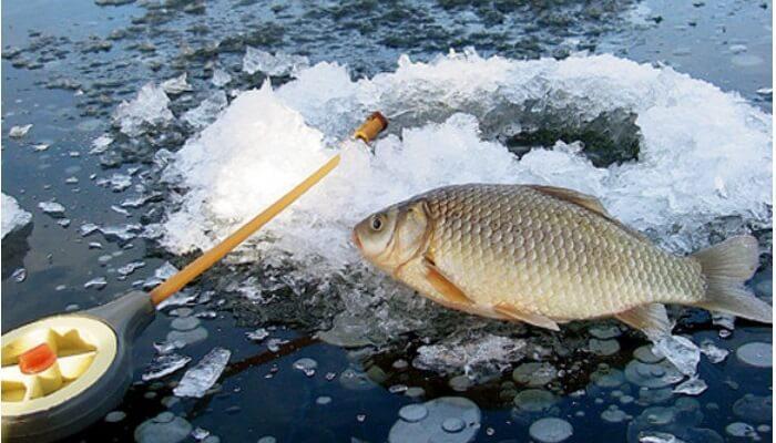 Зимняя рыбалка на карася: методы и особенности ловли