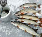 Зимняя рыбалка на щуку: проверенные на практике советы