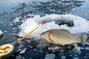 Зимняя рыбалка в Украине на карася