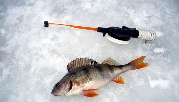 Зимняя рыбалка в Украине: какую рыбу и как ловить
