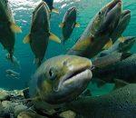 Впервые за 3 года в госбюджет заложено средства на развитие рыбной отрасли