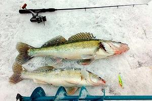 Календарь рыбака на 26-31 декабря: ловля судака