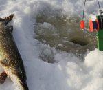 Ловля щуки на жерлицы или зимние удочки: какой способ выбрать