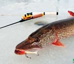 Календарь рыбака на неделю 22-28 января