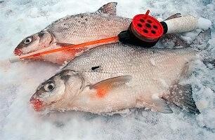 Календарь рыбака 23-31 января: советы по ловле леща