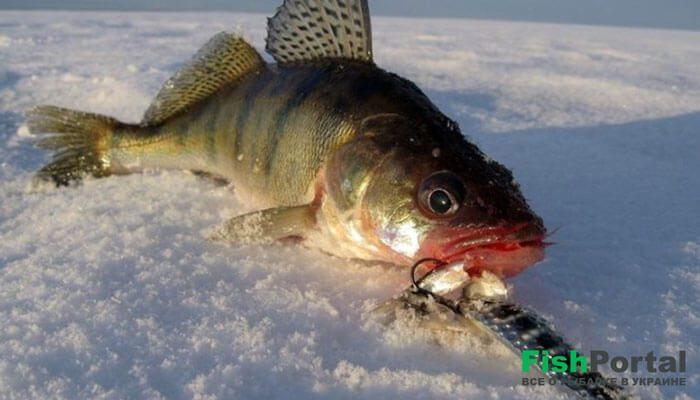 Календарь рыбака на 16-22 января: чего ожидать от погоды и как ловить хищников