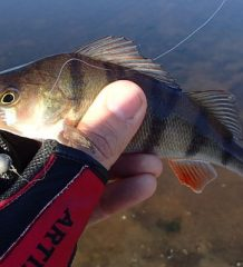 Рыбалка на арендованных водоемах: правила, права и обязанности обеих сторон