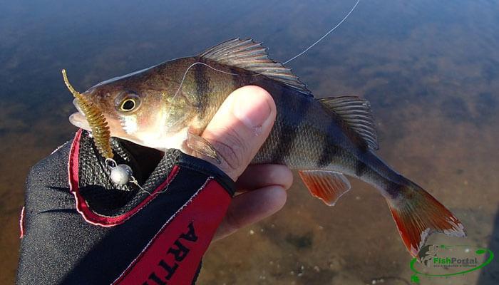 запорожская рыбалка форум