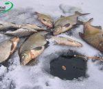 Ловля леща зимой на мормышку: советы опытных рыбаков