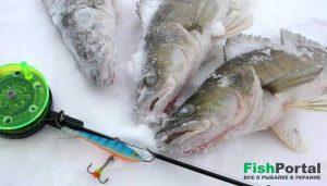 Ловля судака зимой на балансир: тонкости оснастки и техники